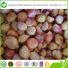 Wholesale bulk iqf spring onion frozen fresh shallot onion