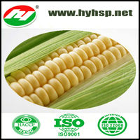 Sweet Corn Cob In Vacuum Packing great price for sell