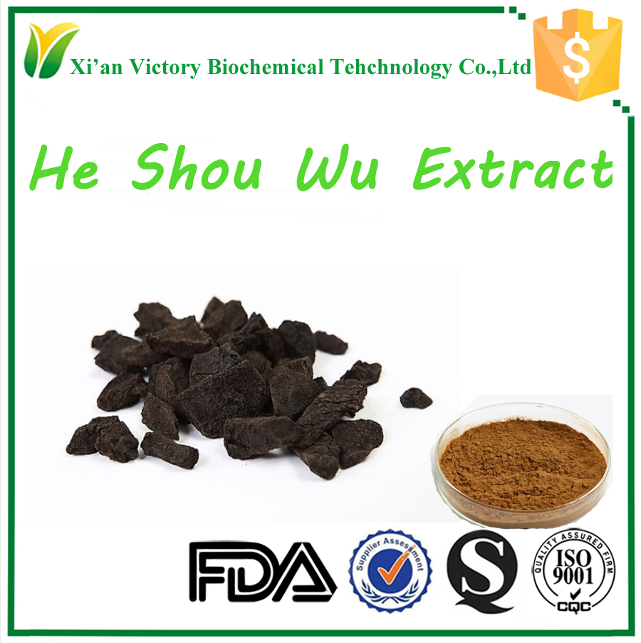 Organic Herbal plant He Shou Wu Extract 10:1