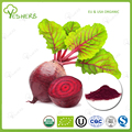 Manufacturer best price beet root powder