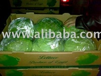 Fresh Quality Egypt Cabbage