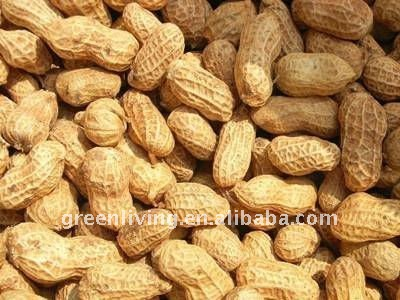 Good Qality Chinese Peanuts in shell