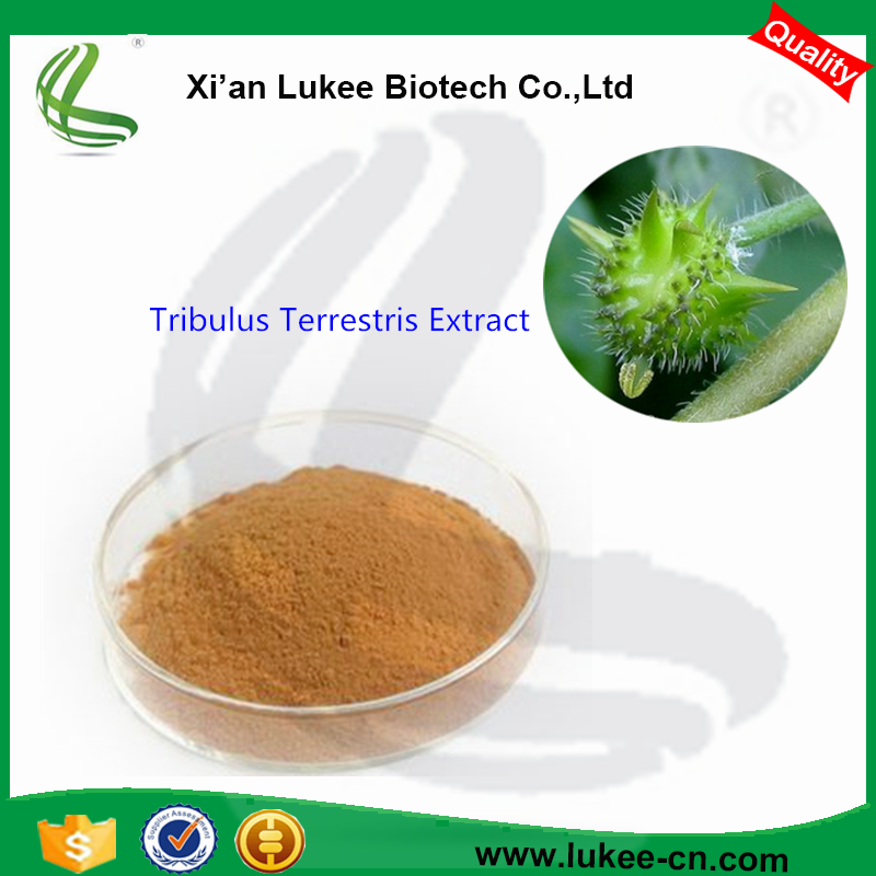 High Quality Tribulus Terrestris Extract Powder for medicine long time sex