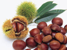 High sale No pollution Bulk fresh frozen chestnuts