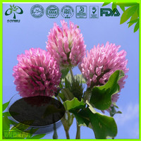 100% natural red clover extract powder Isoflavones 5:1 10:1 free sample