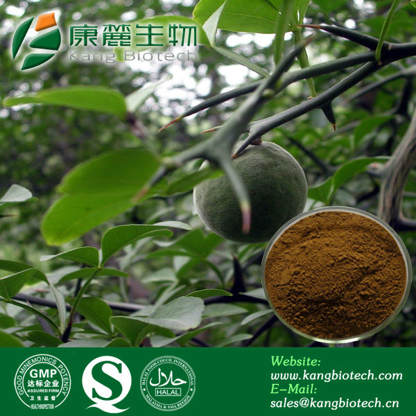 Chinese herb Medicine, Botanical Extract Synephrine Extract Powder