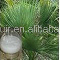 GMP factory saw palmetto extract 20 1