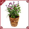Indoor decorative flower planter water hyacinth woven small plant pot