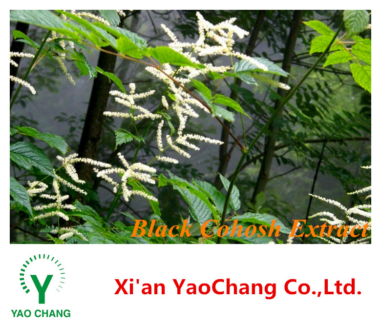 8% Triterpenoid Saponin Black Cohosh Extract Powder