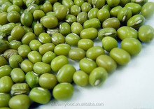 Chinese wholesale green bean seed