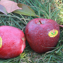 New season red star apple,goldend delicous apple,huaniu apple