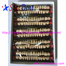 Two Layers Synthetic Resin Teeth of Dental Material