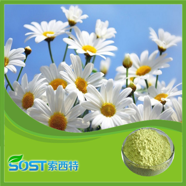 high quality and best price chamomile extract 1.2% apigenin