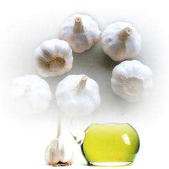 Herbal products 100% pure Natural Garlic Oil price