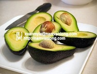 FRESH AVOCADO with HIGH QUALITY and BEST PRICE