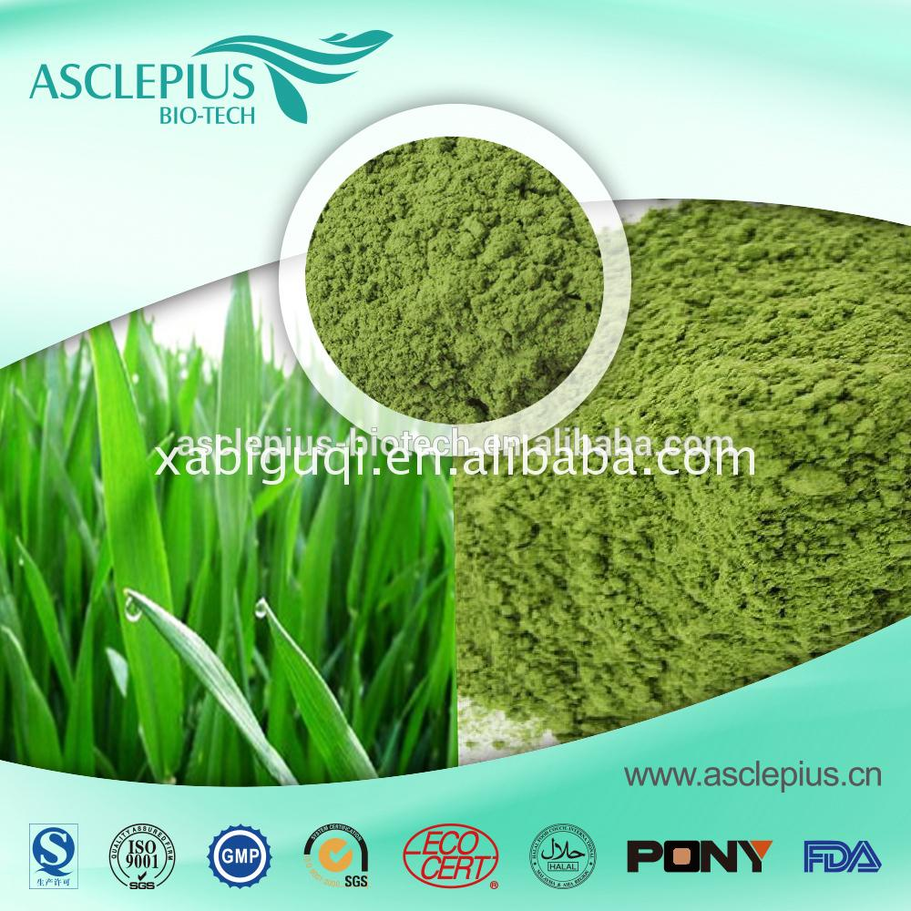 High quality long duration time green barley benefits cancer manufactures