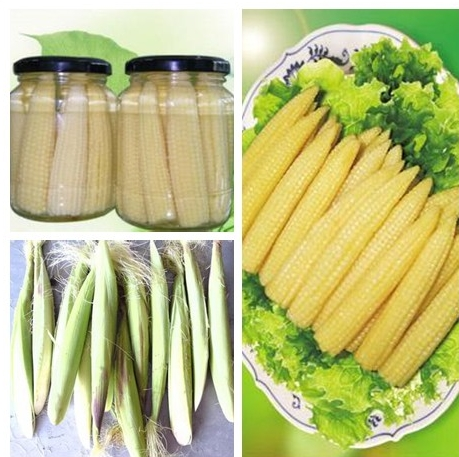 fresh canned baby corn whole 425g