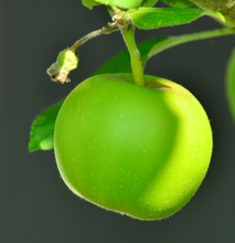 Green apple Essence E Juice Flavor