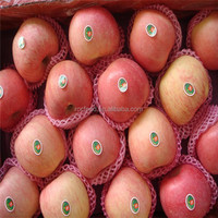 Sweet Red Fuji Apple Fruit for importers from india and Mid East