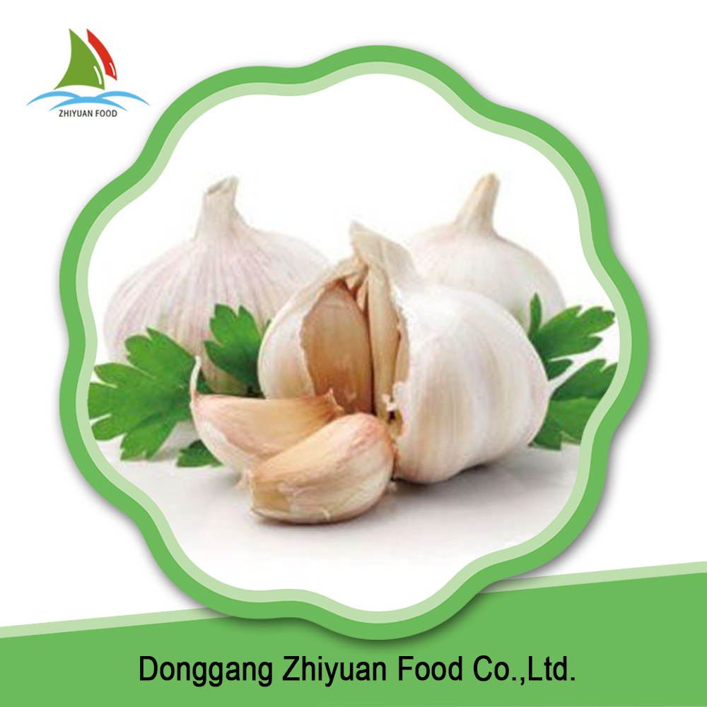 China fresh common wholesale pure white garlic