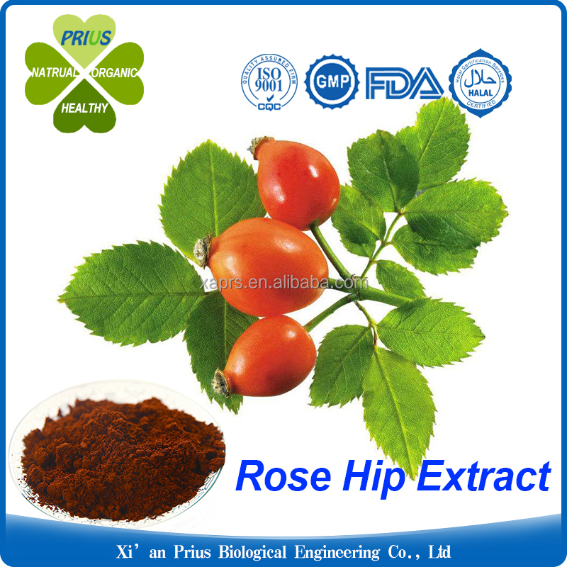 Reliable manufacture supply natural rose hip extract