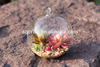 High Quality Hanging Glass Teardrop&Globe Terrarium Perfect for Air Succulent Plant For Garden or Home Decoration