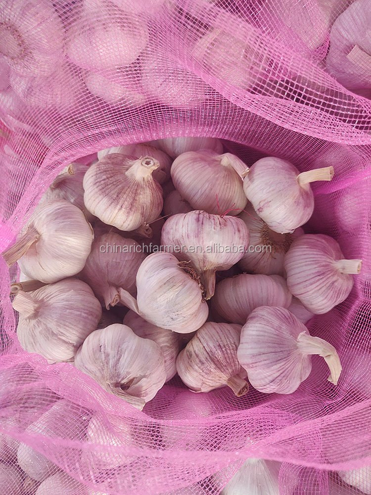 5.0 CM Natural White Garlic Sale To Colombia Market