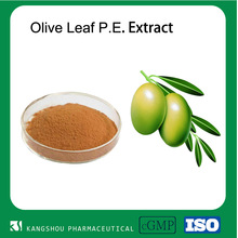 Top grade Chinese herbal extract in bulk 40% oleuropein Olive leaf extract