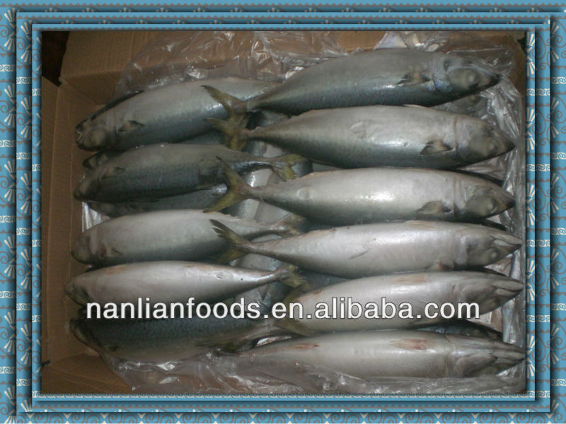 frozen mackerel in fish 300-500g