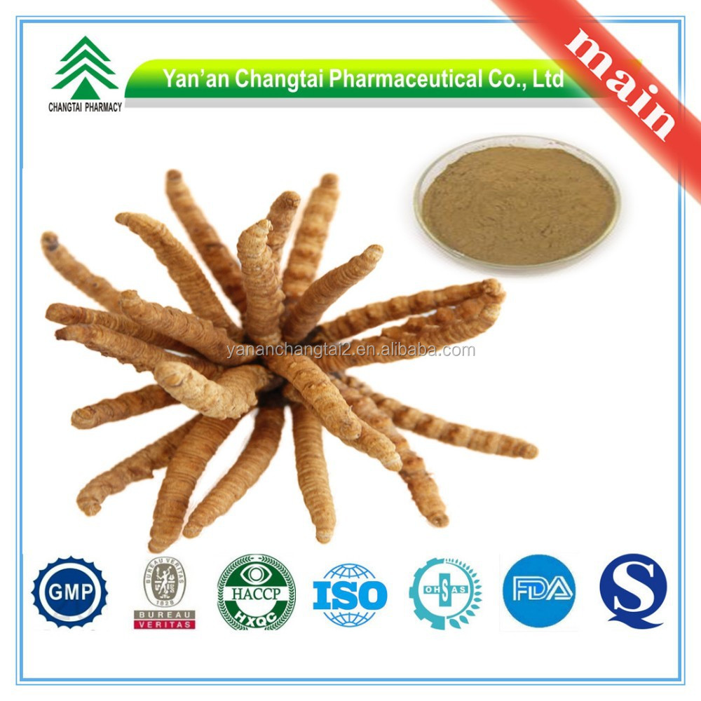Manufacturer Supply GMP Certificate 100% Pure Natural Chinese Caterpillar Fungus Cordyceps