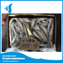<span class=keywords><strong>Lumière</strong></span> Attraper W/R Sardine <span class=keywords><strong>Poisson</strong></span>/Sardinella Longiceps, Taille 6-8 pcs/kg