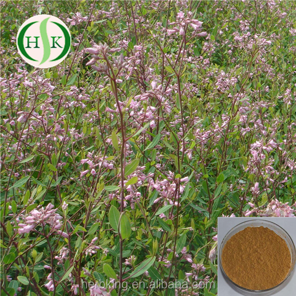 Natural Total Flavone 10% Factory Outlet Apocynum Venetum Extract