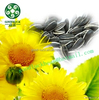 Small Black Sunflower Seeds Oil Mill