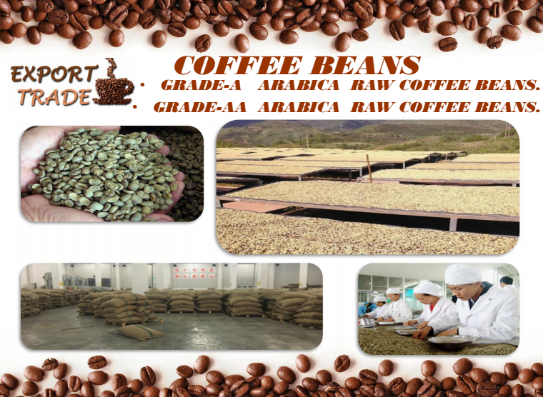 High Quality - Arabica Green Coffee Bean ---China.Yunnan