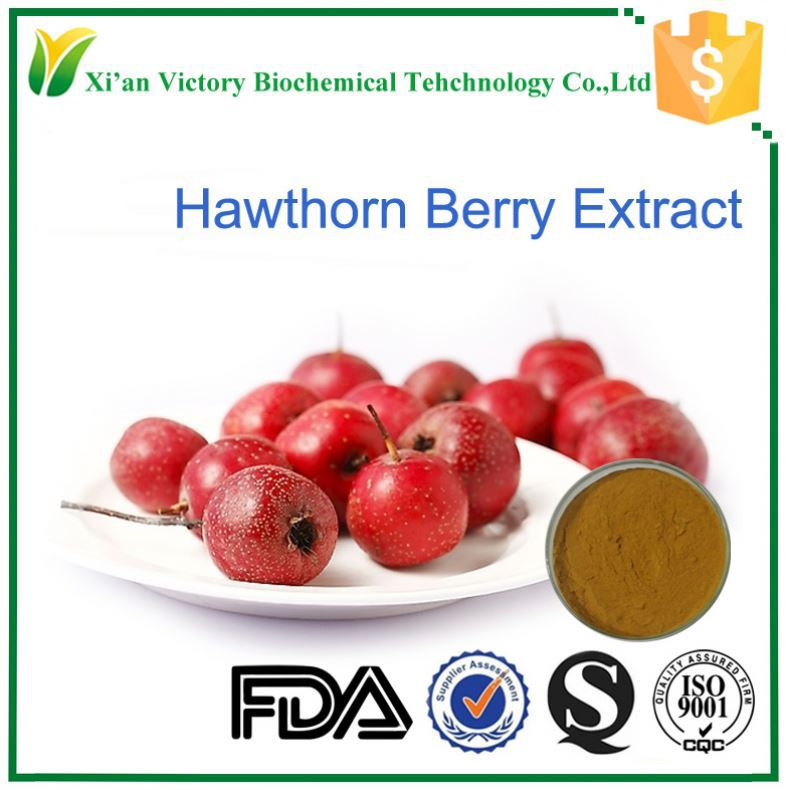 100% natural high quality hawthorn berry/leaf extract