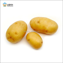 2017 Shandong farm cheap price large sizes organic potatoes wholesale