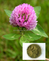 Trifolium Paretense L. red clover extract powder Isoflavones 2.5% 8% 20% 40% HPLC