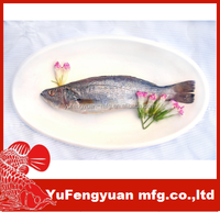 Whole Frozen whole Trout fish/frozen seafood