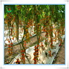 Single Span Tomato Growing Tunnel Green