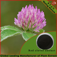 Plant Extract 8% Isoflavones HPLC Red Clover Powder