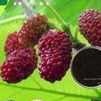 Mulberry Fruit Extract, 25% OPC, Mulberry