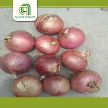 onion in cold warehouse with high quality
