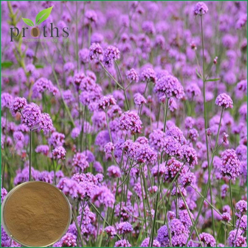 supply herb natural blue vervain verbena extract powder