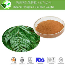 100%Natural Herb Medicine Polypodium Vulgare Root Extract