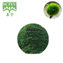 100% pure natural marine algae extract powede Chlorella extract