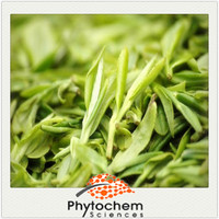 Wholesale green tea extract powder 98% Polyphenols 98% EGCG 80% Catechins/Lv Cha