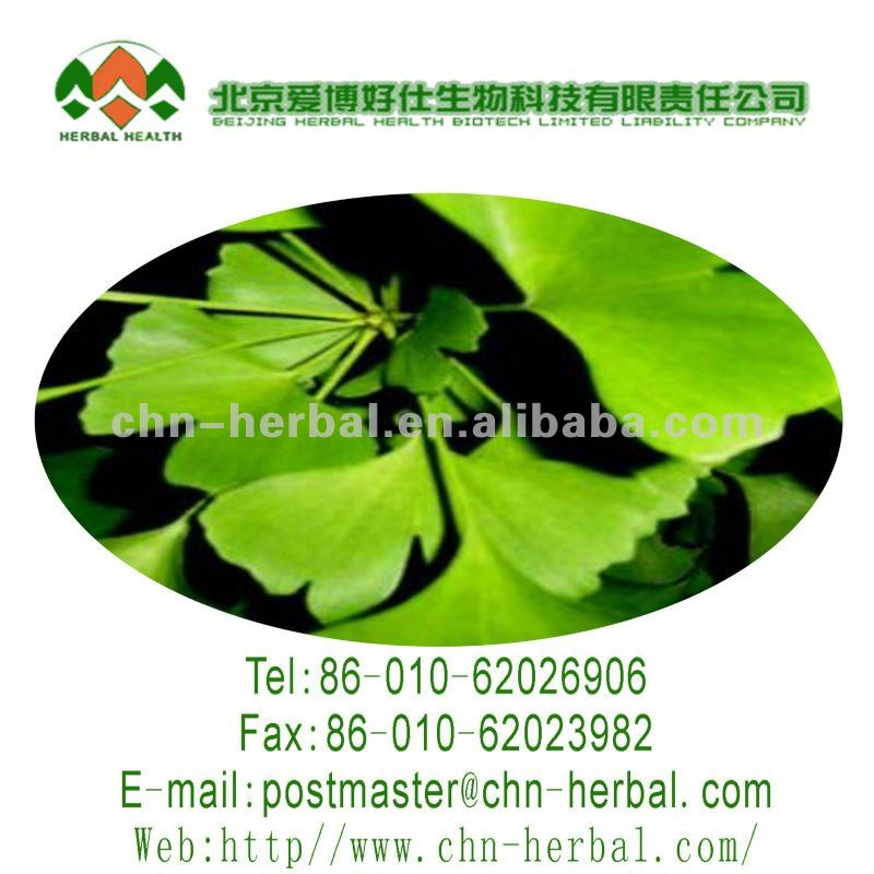 China manufacturer High quality ginkgo biloba leaf powder folium ginkgo extract ginkgo biloba l.gingko biloba extract powder