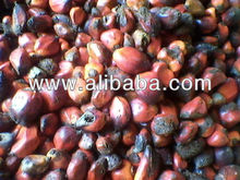 Palm nuts and Palm kernel shell