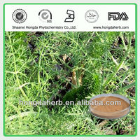 Supplier Manufacturer Top Quality Fennel Seed Extract