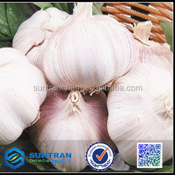 Food grade Dehydrated garlic price